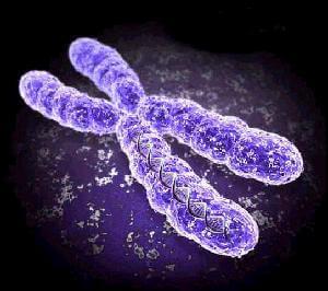 Choroby genetyczne - rodzaje, dziedziczenie